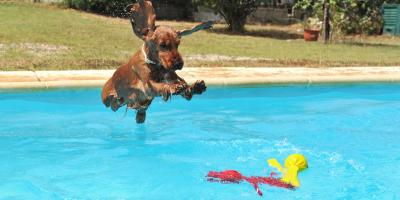 How to Get Your Dog to Love Swimming, Ewa, Hawaii