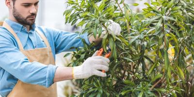 What Is the Difference Between Tree Trimming & Pruning?, Kalispell, Montana