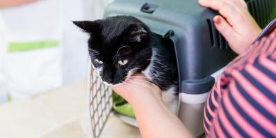 Tips on Crating Your Cat for a Trip to the Veterinarian, Wentzville, Missouri