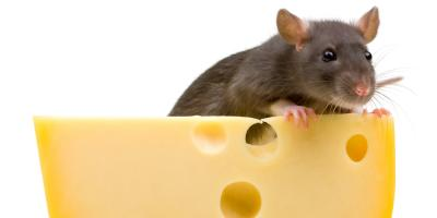 Top Exterminator Answers 4 FAQs About Rodent Control, Trenton, Ohio