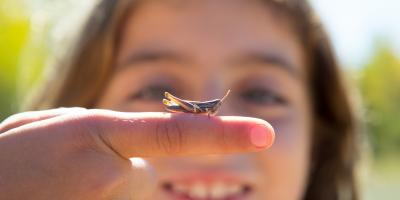 How to Protect Kids During Pest Control Services, Bolivar, Missouri