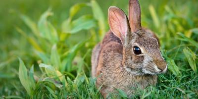 5 Flowers That Rabbits Won't Eat, Ballwin, Missouri