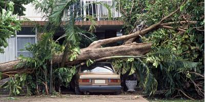 4 Signs a Branch or Tree Is About to Fall, Honolulu, Hawaii