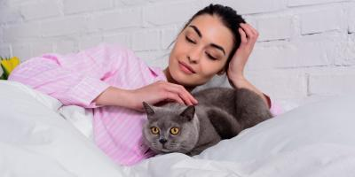 4 Tips to Care for Your Pet After a Major Operation, Amsterdam, Virginia