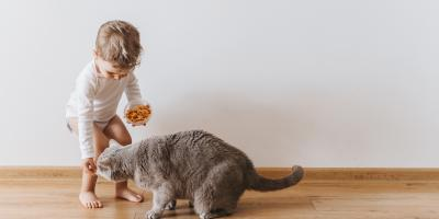 3 Signs You Should Talk to Your Veterinarian About Pet Nutritional Counseling, High Point, North Carolina