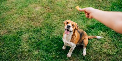 4 Do's & Don'ts for Giving Dogs Treats, Anchorage, Alaska