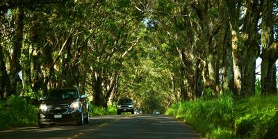 5 Causes of Transmission Leaks & Their Fixes, Ewa, Hawaii