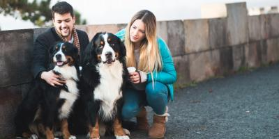 Why Heartworm Prevention Is Important During Winter Months, High Point, North Carolina