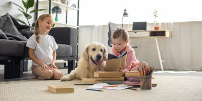 3 Ways to Pet-Proof Your Home's Electrical System, Hilo, Hawaii