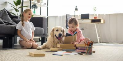 HVAC Tips for Pet Owners, Wentzville, Missouri
