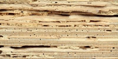Should I Buy a House With Termite Damage?, Newport-Fort Thomas, Kentucky