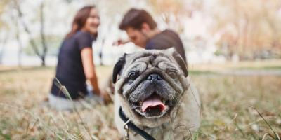 A Missouri Veterinary Clinic Talks About Heartworms, Bolivar, Missouri