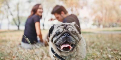 4 Tips for Socializing Your Dog , Churchville, New York