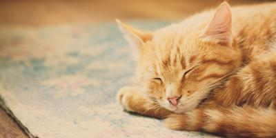 Greater Rochester's Senior Cat Care Professionals Explain 3 Health & Happiness Tips for Your Feline, Penfield, New York