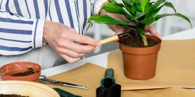When Should You Repot Houseplants? , Port Jervis, New York