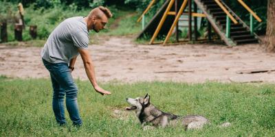 3 Tips to Curb Your Dog's Barking Habit, Milford, Connecticut