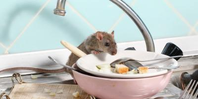5 Tips for Keeping Rodents Out of Your Home, San Fernando Valley, California