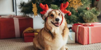 5 Holiday Plants Pet Parents Should Avoid , Perry, Georgia