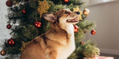 How to Keep Your Pet Safe Around the Holidays, Wentzville, Missouri