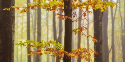 3 Reasons Why Your Tree Leaves Might Turn Brown, Marshan, Minnesota