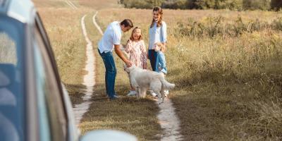 What Happens to a Pet During a Divorce?, Albemarle, North Carolina