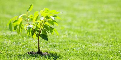 How to Keep Your Newly Planted Tree Alive This Spring, Macedon, New York