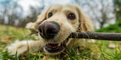 3 Ways to Keep Your Pet Safe From Pesticides, Keaau, Hawaii