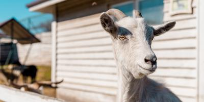 3 Essential Pieces of Livestock Equipment, Seventy-Six, Iowa