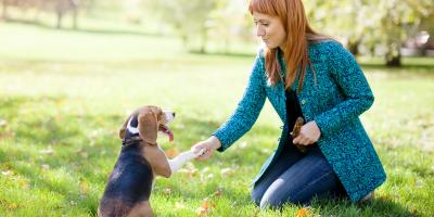 3 Dog Training Tips , Milford, Connecticut