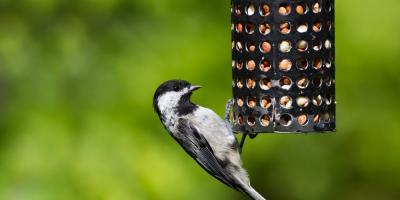 Local Pet Supplies Company Discusses Common Springtime Birds, Bethel, Ohio