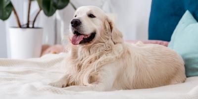 4 Common Reasons a Dog Will Cough, Clarksville, Maryland