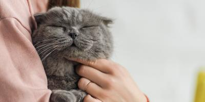 A Cat Owner's Guide: Why Kitties Push Items, Newport-Fort Thomas, Kentucky