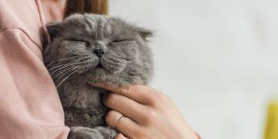 How to Care for a Diabetic Cat, Stratford, Connecticut