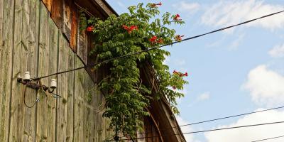 What Is Knob & Tube Wiring? , Cincinnati, Ohio