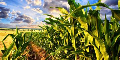3 Helpful Tips for New Farmers, Beatrice, Nebraska
