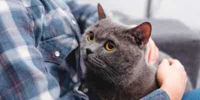 4 Stomach Issues for Cats, Fairfield, Ohio