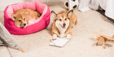 How to Maintain Your Carpet If You Have Pets, Middletown, New Jersey