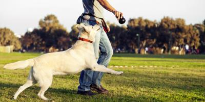Why Do Canines Need Exercise? A Dog Day Care Center Explains, Newport-Fort Thomas, Kentucky
