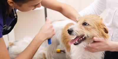 Top 3 Spa-Like Services From NY's Best Pet Groomer, Manhattan, New York
