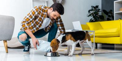 5 Tips to Keep Your Dog Healthy, Montgomery, New York
