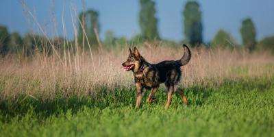 FAQ About Lyme Disease in Dogs, Prairie du Chien, Wisconsin