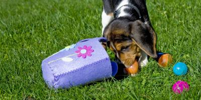How to Protect Your Pet This Easter, Elk Grove, California
