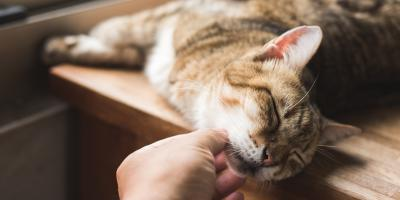 How to Encourage Weight Loss in Cats, Columbia, Missouri