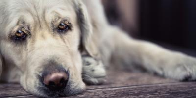 3 Signs of Kidney Disease in Dogs, Sanford, North Carolina