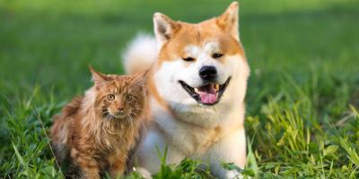 3 Pet Care Tips to Help Dogs Suffering From Heat Exhaustion, Covington, Kentucky