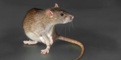 4 Common Winter Infestations That Require Residential Pest Control Services, 2, Maryland