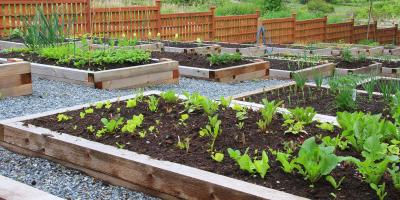 Your Guide to Growing Vegetables In Your Yard, Valley Park, Missouri