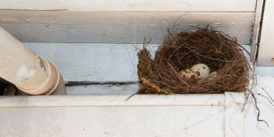 What to Do About Animals in Your Gutters, Hamilton, Wisconsin