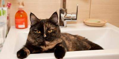 A Guide to Plumbing Protection for New Pet Owners, Oxford, Ohio