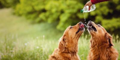 Vet Clinic Explains 3 Signs Your Dog May Be Dehydrated, Harrogate, Tennessee